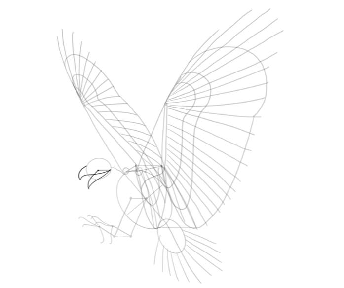 Comment Dessiner Un Faucon Design Et Illustration Developpement De Sites Web Jeux Informatiques Et Applications Mobiles