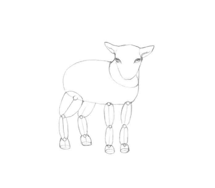 Comment Dessiner Un Mouton Design Et Illustration Developpement De Sites Web Jeux Informatiques Et Applications Mobiles