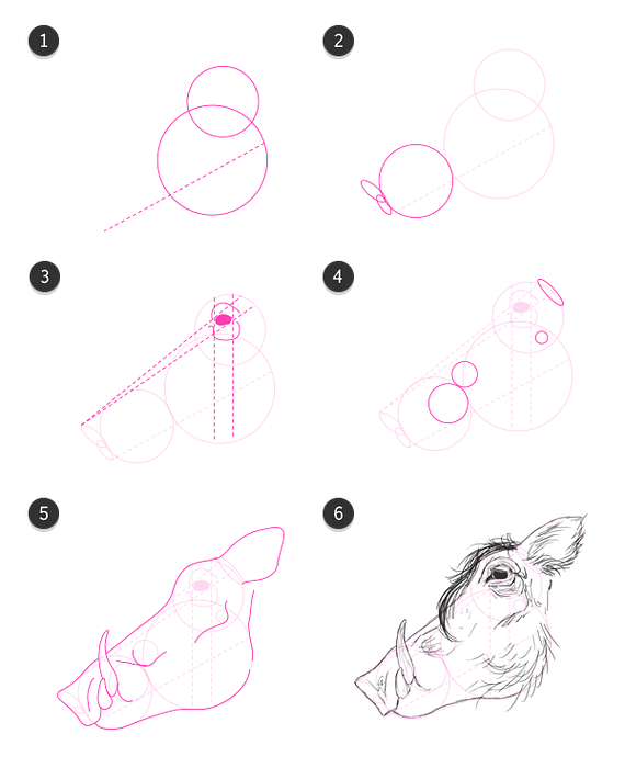 Cómo Dibujar Animales Cerdos Domésticos Jabalíes Y Jabalíes Diseño E Ilustración Desarrollo De Sitios Web Juegos De Ordenador Y Aplicaciones Móviles