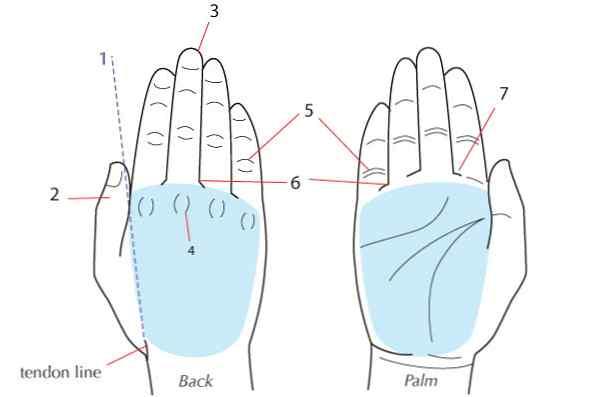 îmbinări ale mâinii drepte