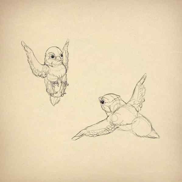 Come Disegnare Gli Animali Gli Uccelli La Loro Anatomia E Come