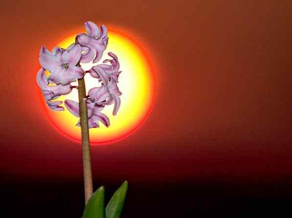 Usando el flash de sincronización de alta velocidad para las grandes fotos de flores / Foto y video | Desarrollo de sitios web, juegos de ordenador y aplicaciones móviles.