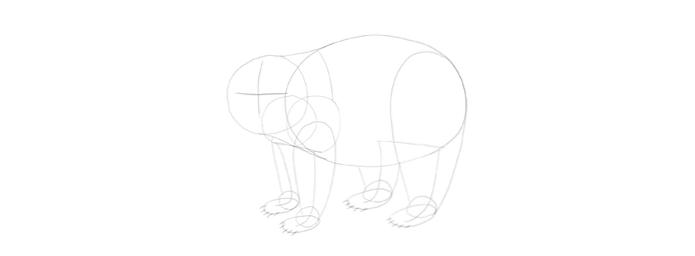 Cómo dibujar un Panda paso a paso / Diseño e ilustración ...