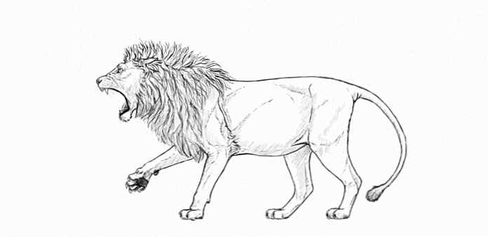 Comment Dessiner Un Lion Rugissant Etape Par Etape Design Et